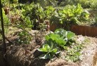 Barnawartha Vegetable gardens 2