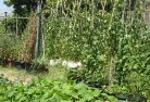Barnawartha Vegetable gardens 6