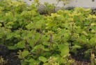 Barnawartha Vegetable gardens 7